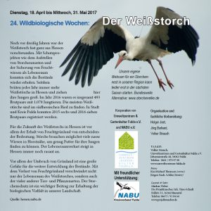 Wildbiologische Wochen Weißstorch Umweltzentrum Fulda